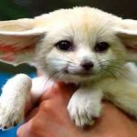Top 10 Cutest Animals in the World